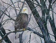 Bald Eagle & Spring Time Snowfall