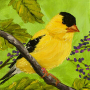 American Goldfinch 818