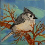 Tufted Titmouse 818